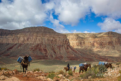 Photograph - Mule Train by Jim McCain