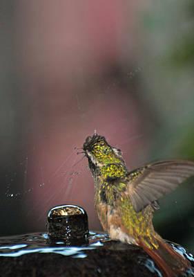 Photograph - Mulege Hummingbird 10 by Jeff Brunton