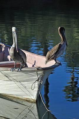 Photograph - Mulege Sea Birds 19 by Jeff Brunton