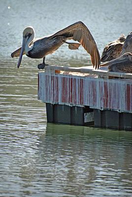 Photograph - Mulege Sea Birds 7 by Jeff Brunton