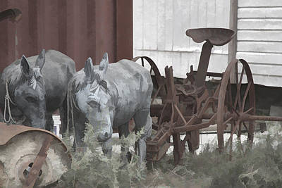 Photograph - Mules by Audreen Gieger