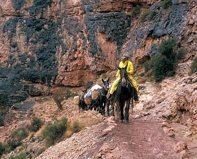 South Kaibab Photograph - Mules Hauling Rubbish In The Grand Canyon by Jim West