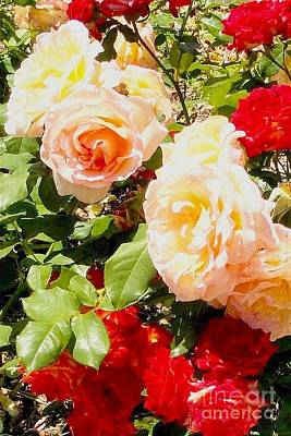 Photograph - Multi-colored Roses by Janette Boyd