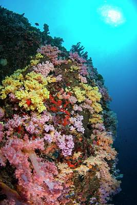 Multi Coloured Soft Coral On Reef Art Print by Scubazoo