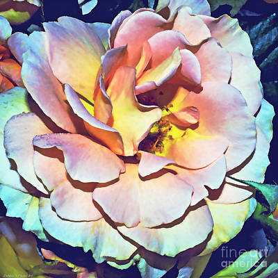 Photograph - Multicolor Rose Photoart by Debbie Portwood