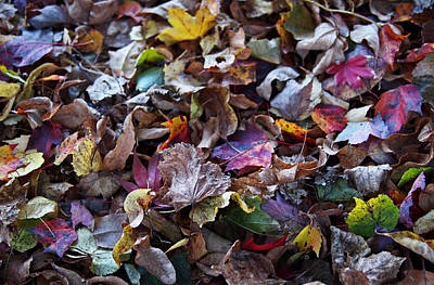 Autumn Art Photograph - Multicolored Autumn Leaves by Rona Black