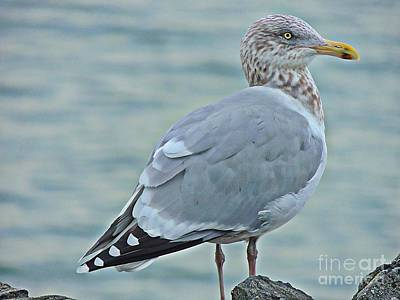 Photograph - Multicolored Gull by Marcia Lee Jones