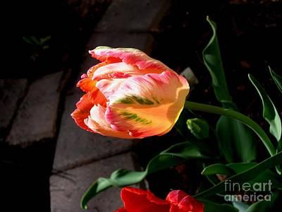 Photograph - Multicolour Lantern by Galina Khlupina