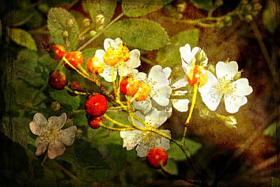 Multiflora Rose And Rose Hips Art Print by Mother Nature