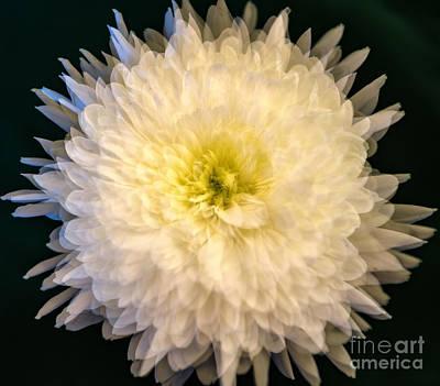 Photograph - Multiple Exposure Flower by Kathleen K Parker