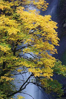 Print featuring the photograph Multnomah Falls Maple by Ken Dietz