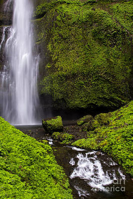 Photograph - Multnomah Green by Sonya Lang