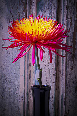 Spider Flower Photograph - Mum Against Old Wall by Garry Gay