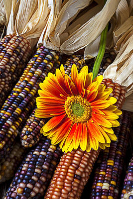 Gerbera Daisy Photograph - Mum And Indian Corn by Garry Gay