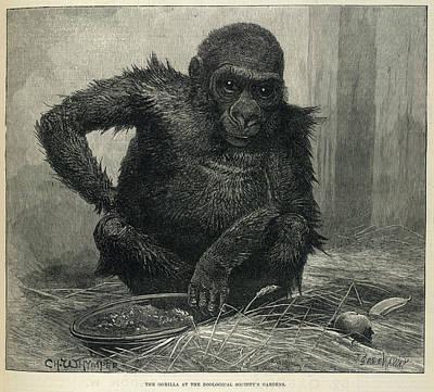 Menagerie Photograph - Mumbo by British Library