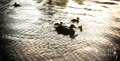 Photograph - Mumma Duck And Ducklings by Cassandra Buckley