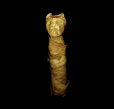 X-ray Image Photograph - Mummified Cat by Dan Sykes/natural History Museum, London