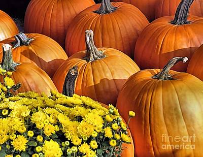 Photograph - Mums And Pumpkins by Janice Drew