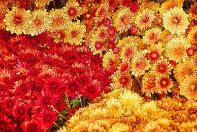 Photograph - Mums At The Farmers Market In Autumn by Peggy Collins