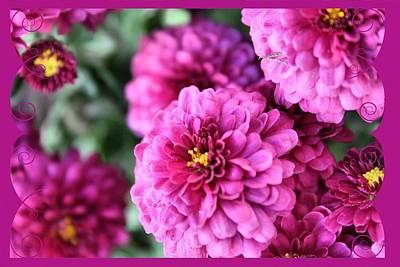 Floral Photograph - Mums by Carolyn Ricks