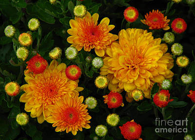 Photograph - Mums The Word by Deborah Johnson