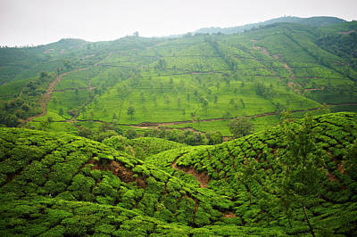 Kerala Photograph - Munna Tea Plantation Landscape by Matthew Leete