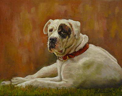 Munson An American Bull Dog Art Print by Nora Sallows