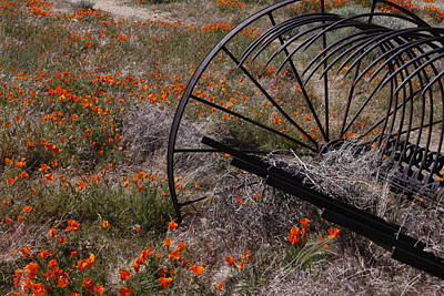 Art Print featuring the photograph Munz Poppy by Ivete Basso Photography