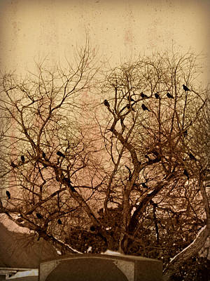 Ravens In Graveyard Photograph - Murder In The Cemetery by Brenda Conrad