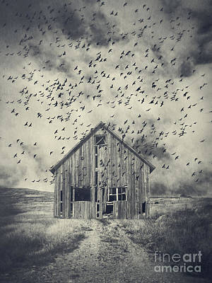 White Barn Photograph - Murder Of Crows by Edward Fielding