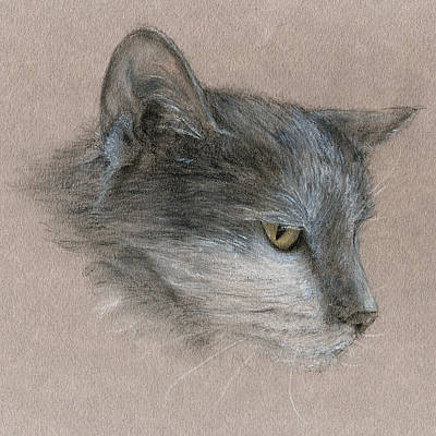 Murray The Cat Art Print by Penny Collins