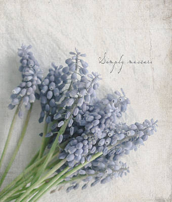 Photograph - Muscari by Beverly Cazzell