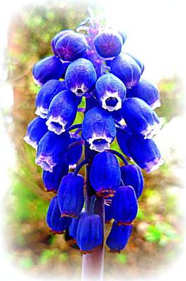 Muscari Grape Hyacinth Art Print by The Creative Minds Art and Photography