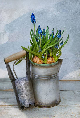 Photograph - Muscari by Robin-Lee Vieira