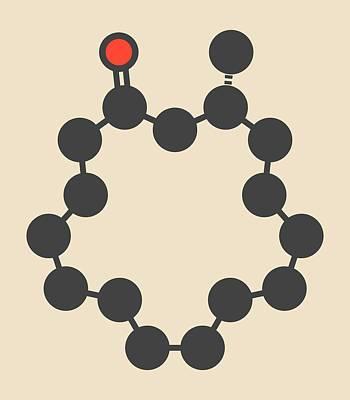 Muscone Musk Odor Molecule Art Print by Molekuul