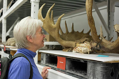 Museum Visitor With Moose Antlers Art Print by Jim West