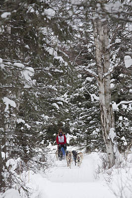 Wildlife Celebration Photograph - Musher In The Forest by Tim Grams