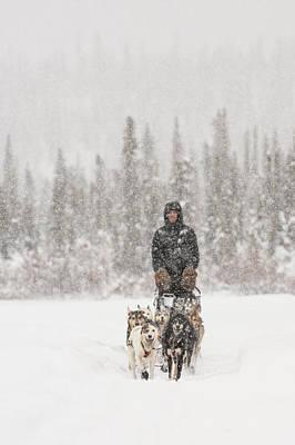 Mushing Through A Snow Storm Art Print by Tim Grams