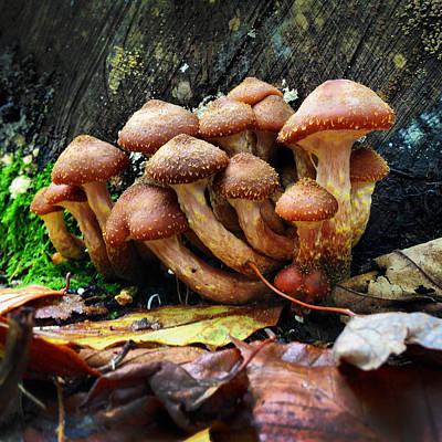 Mushroo10 Original
