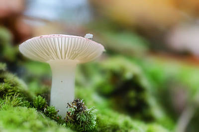 Photograph - Mushroom 5 by Beth Sawickie