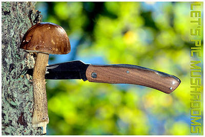 Cep Photograph - Mushroom And Knife by Tommytechno Sweden