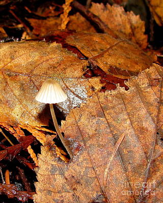 Photograph - Mushroom And Leaves by Leone Lund