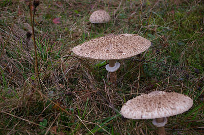 Taunus Photograph - Mushroom Family by Robert Kimble
