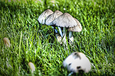 Photograph - Mushroom In September Hdr by Rich Collins