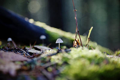 Photograph - Mushroom In The Light by Crystal Cox
