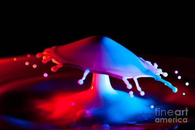 Photograph - Mushroom Invasion by Anthony Sacco