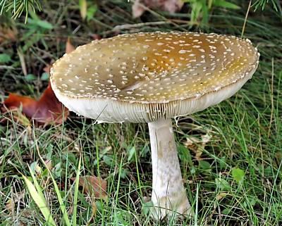 Photograph - Mushroom by Janice Drew