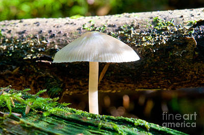 Photograph - Mushroom Magic 6 by Terry Elniski
