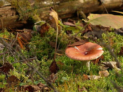 Mushroom N Moss Original by James Peterson