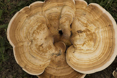 Photograph - Mushroom Sculpture by Wanda Brandon